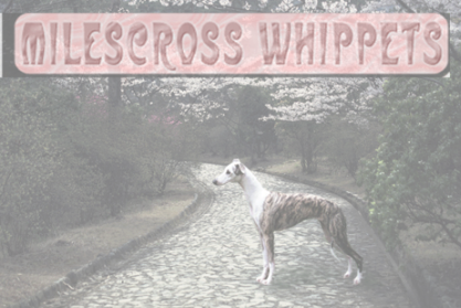 The Milescross Whippets